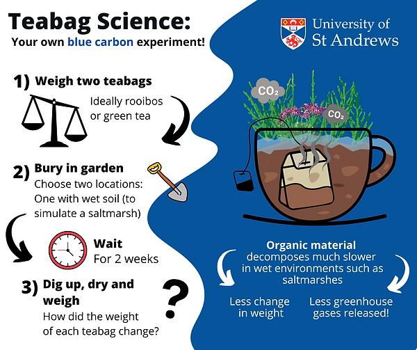 Teabag science.png