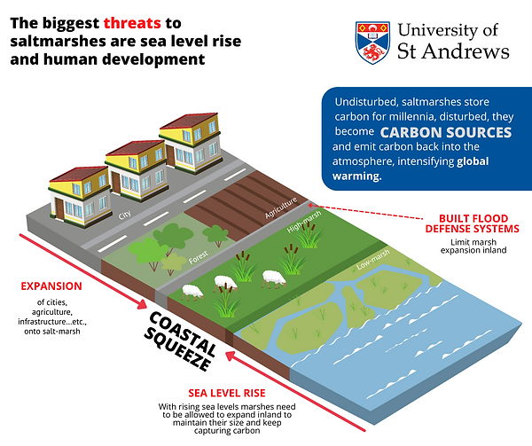 Threats to saltmarshes.png