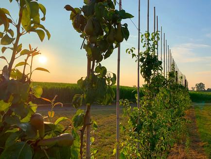 Vlijtingen - wijngaarden