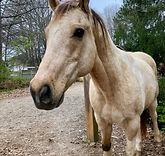 white horse brown nose