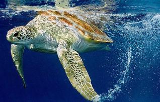 tartaruga che nuota, prodotti eco