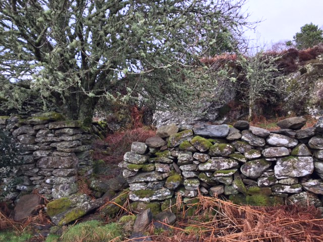 Deserted village in Glenan Wood