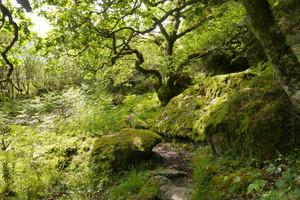Saving Scotland's rainforests