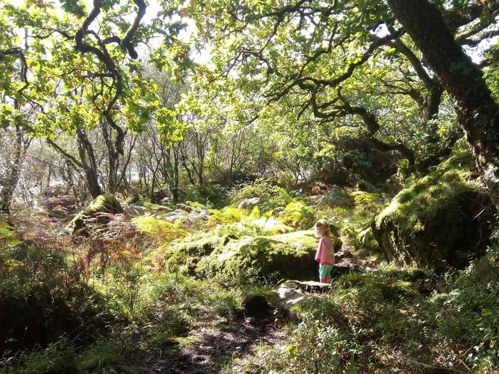 Glenan Wood