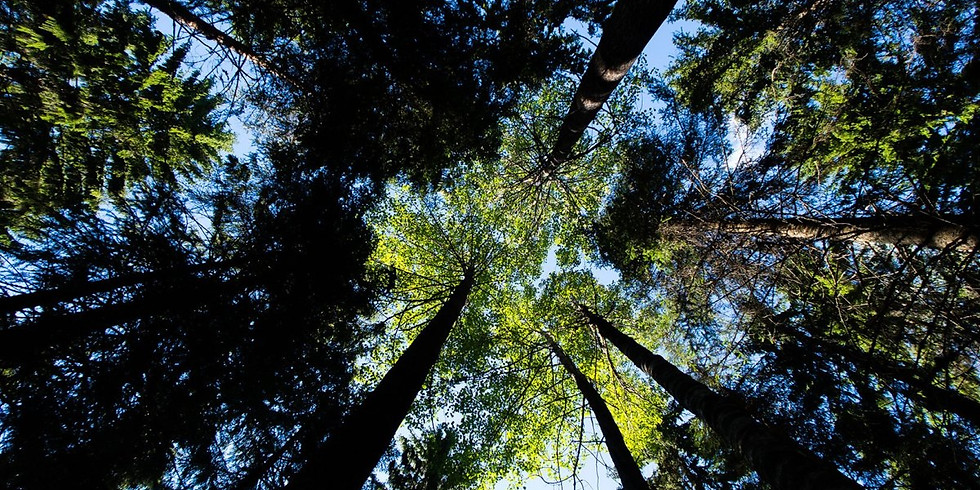 Nature Appreciation Forest Bathing with Heather Farrell