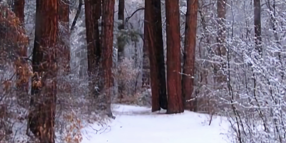 Late Winter Forest Bathing with Heather Farrell