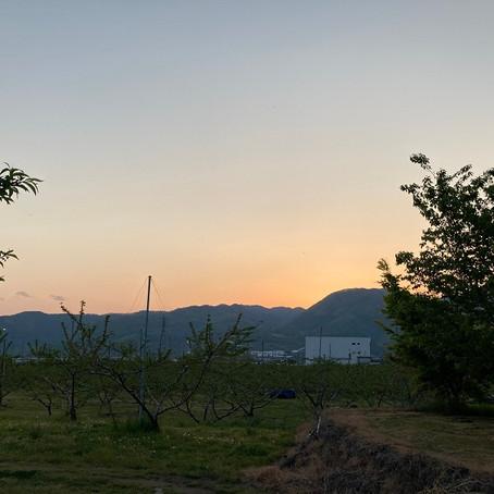 桃畑の生き物たち Vol.4