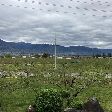 桃畑の生き物たち Vol.3