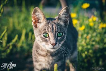 Кот с зелеными глазами