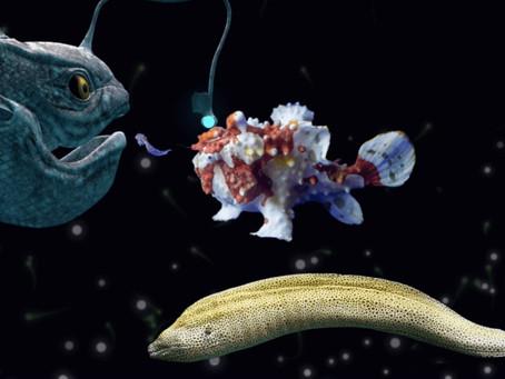 深海のtanQ 7月スタート会員募集中