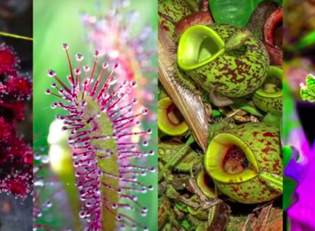こんな植物があったなんて…‼︎ おうちでも育てられるオモシロ植物を紹介♪