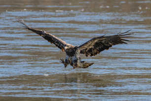 Eagle Strike!.jpg
