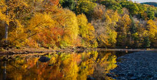 Golden Fall Stream.jpg