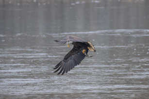 Eagle Fishing 8.jpg