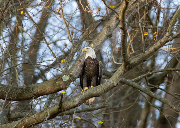Bald Eagle Viewing.jpg