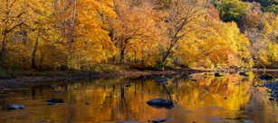 Golden Hour during Autumn.jpg
