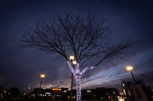 Rio Winter Tree.jpg