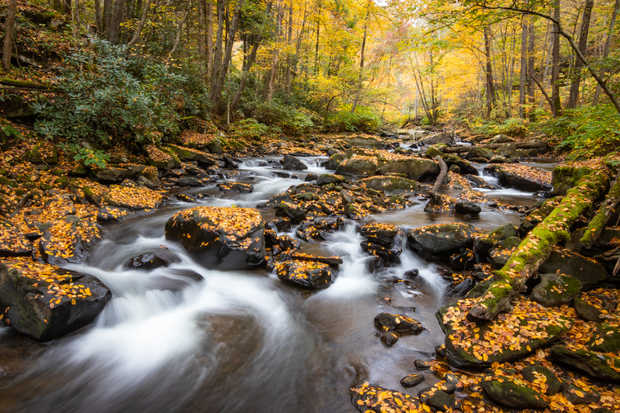 Dunloup Creek Rapids.jpg