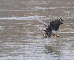 Eagle Fishing 2.jpg