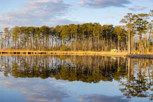 Blackwater Reflections - Far Foliage.jpg