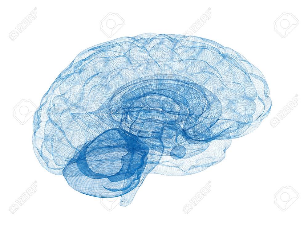 Gráfico representativo del Sistema Nervioso Central.