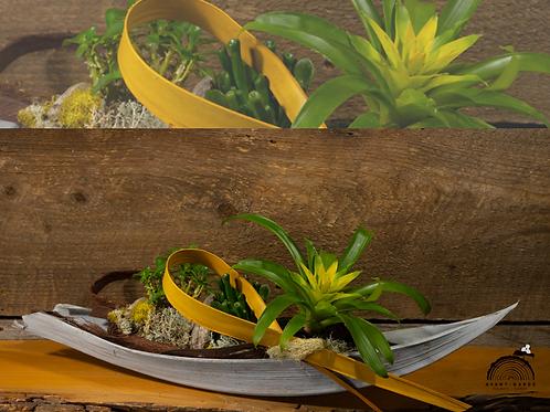Jardin canot guzmania jaune