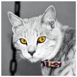 חתול תעלול