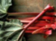 赤ルバーブ.jpg