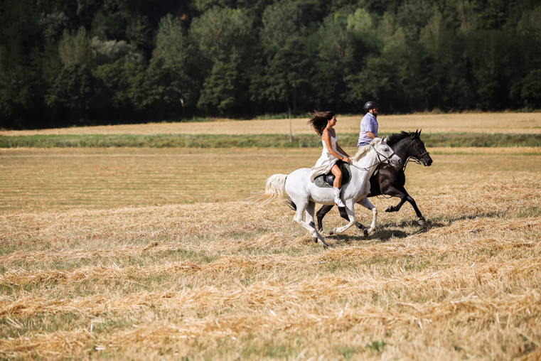 Cantering across a stubble field