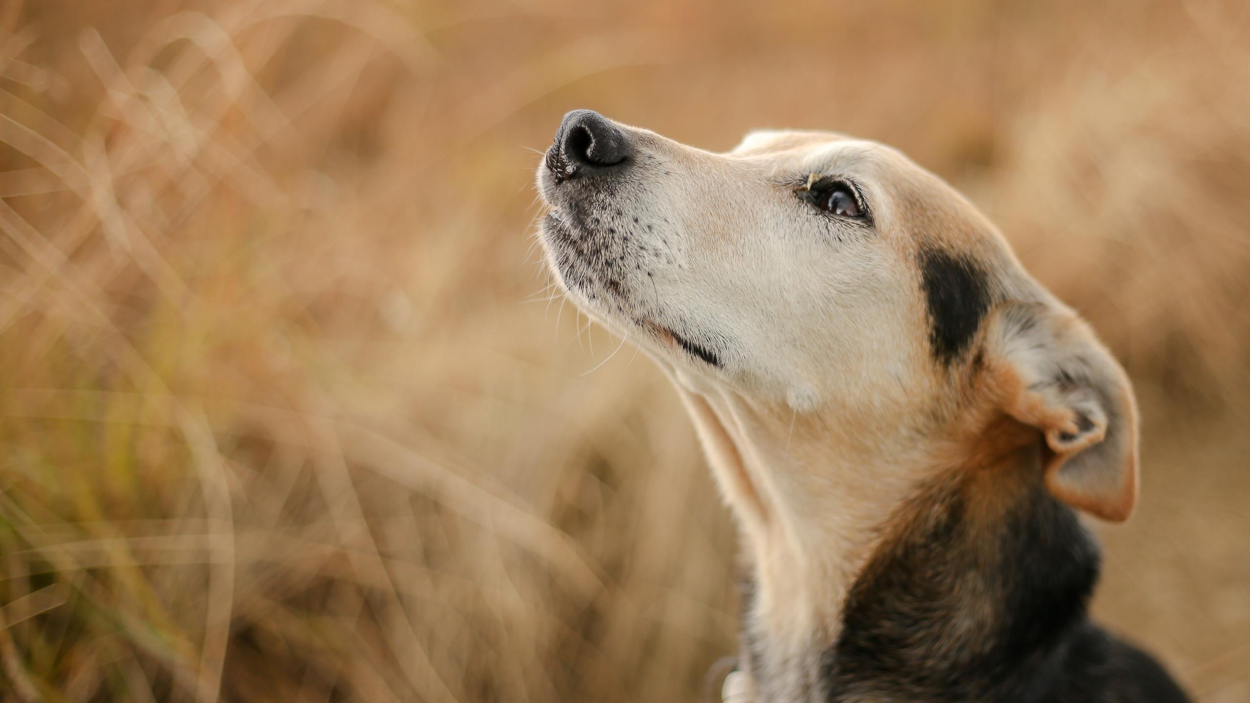 Doggy Portrait.