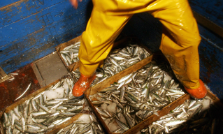 National Investigation on the Treatment of Fishing Fleet Workers