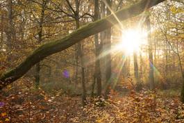 Forêt de Mietesheim, novembre 2020