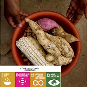 Cambio climático y la seguridad Alimentaría objetivos de desarrollo sostenible ODS