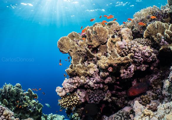 lovely reef.jpg
