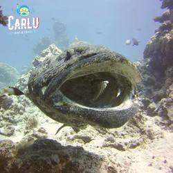 Cod hole - Australia