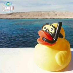 Carlu Duck - Egypt