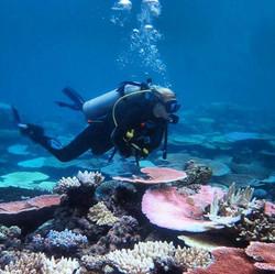 Coral City-Australia