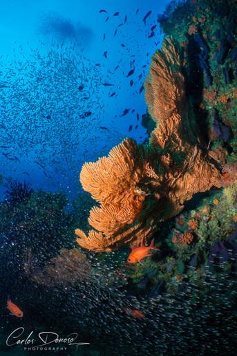 fishfish1.jpg