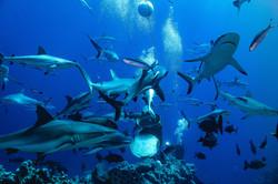 Osprey Reef-Australia