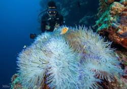 Coral Sea - Australia