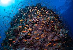 antias and reef