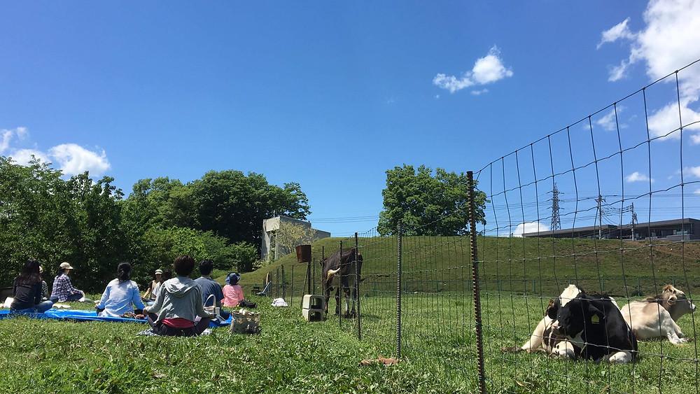 磯沼ミルクファーム,牛,牧場ヨガ,tara