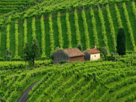 Prosecco makes history with UNESCO heritage site status