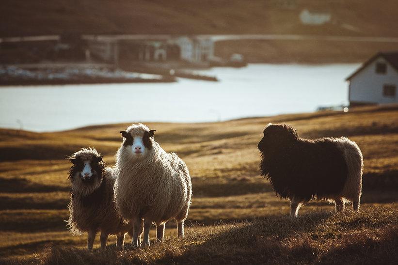 Faroe Islands-8.jpg