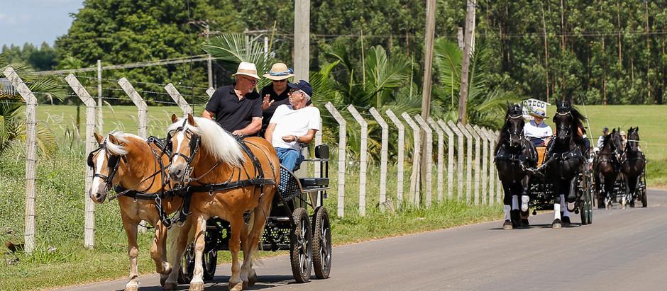 Pela 3ª vez, praticantes de Atrelagem desfilam na cidade de Holambra (SP)