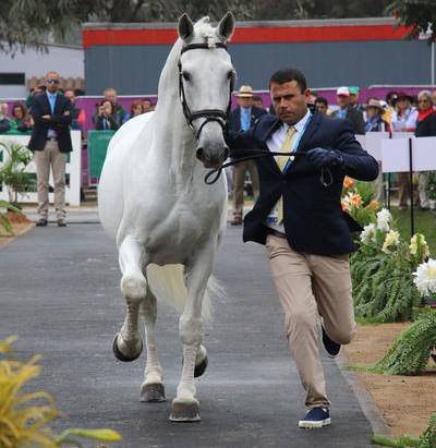 Cavalos do Time Brasil de Adestramento no Pan são 100% aprovados na inspeção veterinária
