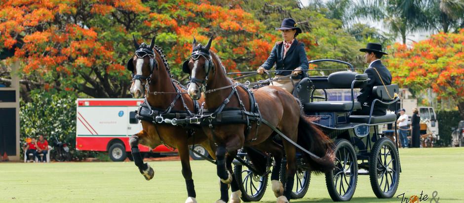 Tarde de Atrelagem e Polo confirma o sucesso dos eventos equestres na região