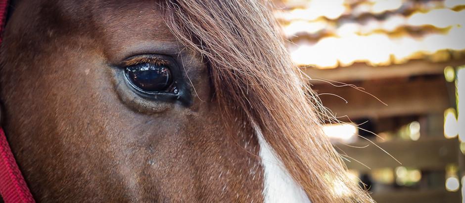 Escola de Equitação Troá sedia, em Valinhos (SP), Constelação Sistêmica com Cavalos