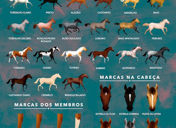 Cavalos: conheça as diferentes pelagens de maneira simples e não se confunda mais