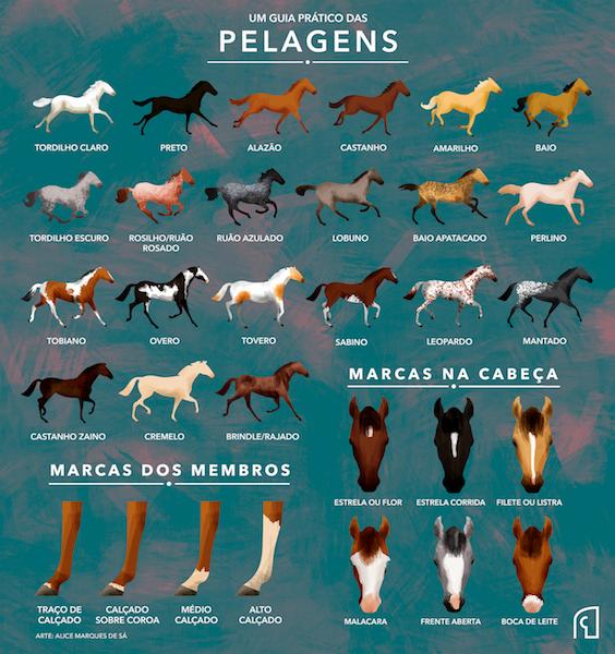 """infográfico """"Pelagens de Cavalos"""", elaborado pela Chevaux"""